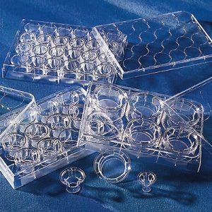 Inserto para membrana de PET transparente Transwell